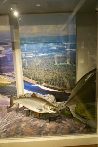 Alta001-0390Altamuseum