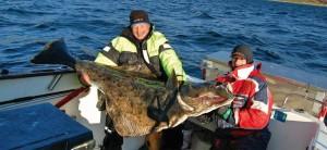 Hammeferst fiske 1