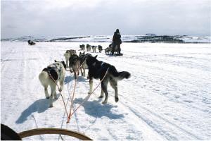 Finnmarksløpet 4