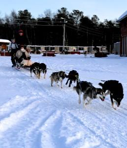 Alta Holmen hund 07