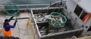 Måsøy fiskerikommune 11